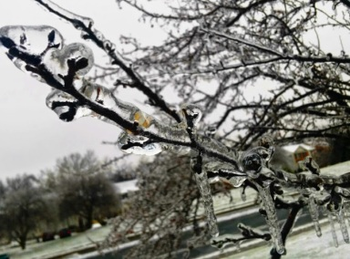 snow ice branch color